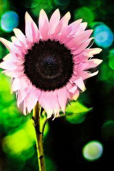 pink #Flower Arrangement| http://flowerarrangementideas.lemoncoin.org