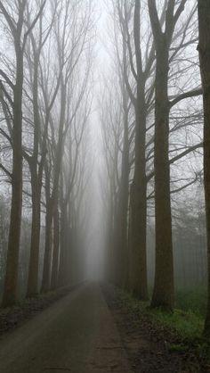 Dordt.de.elsen in de.mist