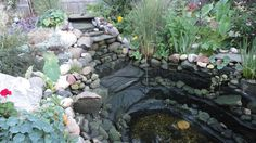 our pond without water