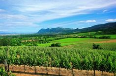 Klein Constantia, with False Bay in the background, Cape Town, South AFrica Planning Board, Trip Planning, Provinces Of South Africa, South Afrika, Cape Town South Africa, Places Of Interest, Wineries, Wine Country, Homeland