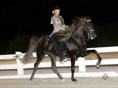 """CCF Unfinished Business, 7yr old RMHA/KMSHA Stallion for sale in Prestonsburg, KY  Due to being in law school, I do not have as much time for showing and as you see in the photo, the show ring is where """"Andy"""" loves to be. I decided the best thing I can do for him is to sell him so he does not have to stand around. Andy is 15.2 hands and has no red gene. He is sired by Pence's Blue Boy and dam is AHFs Nickolette (Nick mare). He is not spooky at all and has a fabulous, powerful ..."""
