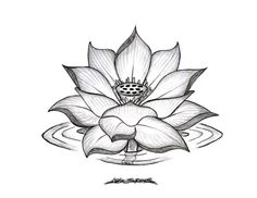 minus water ripple, and change the bud_ _ Black lotus tattoo design Black Lotus Tattoo, Lotus Tattoo Design, Flower Tattoo Designs, Flower Tattoos, Lotus Design, Lotus Henna, Lotus Mandala, Flower Mandala, Flower Designs