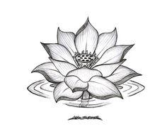 Fleur de lotus dessin recherche google tattoo - Fleur de lotus bouddhisme ...