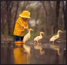A rainy day won't stop this youngster from waddling through the puddles with her cute little duck friends. Animals For Kids, Animals And Pets, Baby Animals, Cute Animals, Animal Pictures, Cute Pictures, Cute Kids, Cute Babies, Tier Fotos
