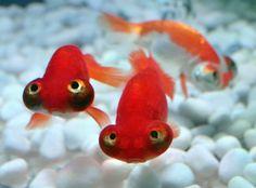 Tokyo illumina i pesciolini: l'arte degli acquari