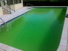 Why is my pool still green and cloudy? Answers to clearing a pool with green algae