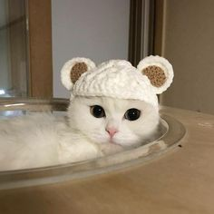 Want more cute cats videos stories , latest cas and kittens videos rescue stories and funny vid , the image Cute Baby Animals, Animals And Pets, Funny Animals, Nature Animals, Pretty Cats, Beautiful Cats, Gatos Cats, Cat Aesthetic, Cute Cat Gif