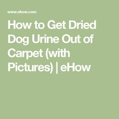 How to Get Dried Dog Urine Out of Carpet (with Pictures) | eHow