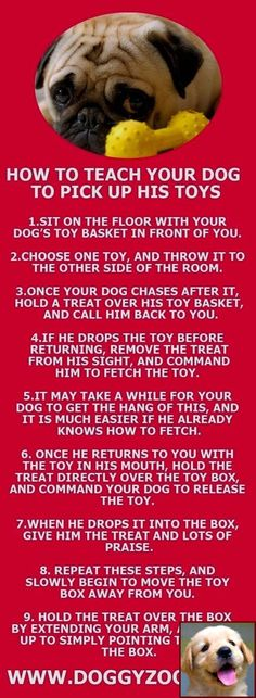 to Teach Your Dog to Pick Up His Toys Hmmm, this looks interesting! How to teach your dog to pick up his toys.Hmmm, this looks interesting! How to teach your dog to pick up his toys. Dog Training Courses, Dog Training Tips, Potty Training, Agility Training, Training Classes, Pitbull Training, Dog Agility, Leash Training, Training Schedule