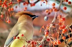 Berries for Birds: Want to attract more birds to your backyard? Start with berries…birds love them!