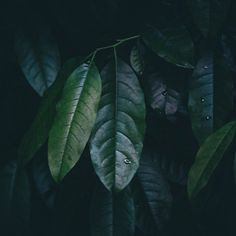#plants Photo @mina_ivancic