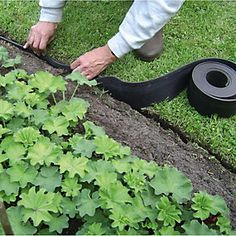Lawn Edging from Plants From Zion. Big collection of Lawn Edging from United Kingdom. Also deals in Manufacturer of Lawn Edging