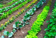Top Vegetable Garden Ideas for Beginners 2013 Pictures