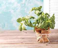 Leafing through the creative uses, versatility, and health benefits of basil. Photography: Michael Fornataro Styling: Samantha Casale