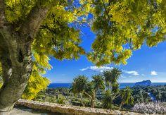 Mimosa in bloei (februari)  langs de kust van Benissa. Te vinden bij de Ermita de Pedramala.