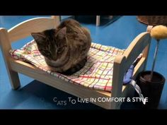 #Shelter #Cats Curl Up On Donated Dolls #Beds http://ibeebz.com