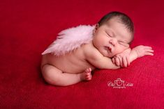 Light Pink Feather Angel Wings Newborn Baby Photo Prop   Beautiful Photo Props