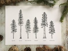 Items similar to Evergreen Trees - Print on Etsy Evergreen Tree Tattoo, Evergreen Trees, Redwood Tattoo, Pine Tree Tattoo, Tree Tattoos, Tatoos, Tree Branch Tattoo, Giant Sequoia Trees, Tattoo Designs