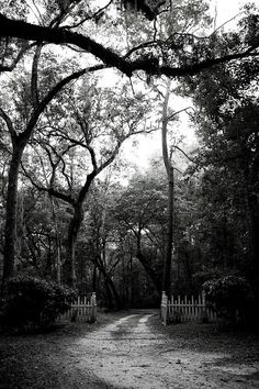 Lovely black and white photography.