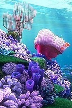 """Coral Reef via Pinterest -  اللهمَّ ! اغفرْ لي خطيئَتي وجَهلي . وإسرافي في أمري . وما أنت أعلمُ به مني . اللهمَّ ! اغفِرْ لي جَدِّي وهَزْلي . وخَطئي وعمْدي . وكلُّ ذلك عندي . اللهمَّ ! اغفرْ لي ما قدَّمتُ وما أخَّرتُ . وما أسررتُ وما أعلنتُ . وما أنت أعلمُ به مني . أنت المُقَدِّمُ وأنت المُؤخِّرُ . وأنت على كلِّ شيءٍ قديرٌ """" ."""