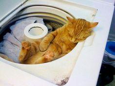 23 Gatos creativos que saben cómo dormir bien