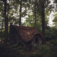 A forest cottage for you