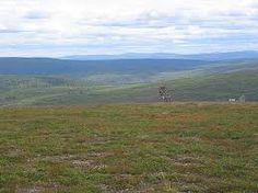 Image result for kaunispää