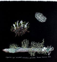 Líquenes del bosque templado chilote. Geraldine MacKinnon Mi Naturalismo-www.gmackinnon.com Gouache sobre papel Canson Edition Botanical Art, Gouache, Paper