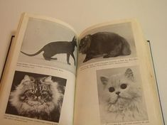 electronics basics book The New Basic Book Of The Cat Electronics Basics, Library Books, Feeding Kittens, Cat Cat, Black And White, News, Cover, Photographs, Vintage
