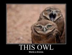 baroque owl hates opera owl's vibrato, or quit singing nessun dorma and let me get some sleep! Funny Owls, Funny Bunnies, Funny Animals, Cute Animals, Animal Funnies, Vancouver, Funny Images, Funny Pictures, Music Humor