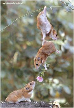 squirell love