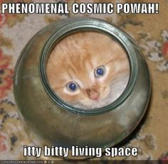 Funny Cat Pictures with Captions Cheeseburger | Cheeseburger Anyone? | Internet Entrepreneurship