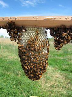 Top bar hive modifications