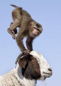 Riding Animals   Hilarious Photos of Animals Riding Other Animals  