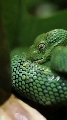 Animal Jokes, Funny Animal Videos, African Bush Viper, Crocodile Eyes, Animal Photography, Nature Photography, King Cobra Snake, Beautiful Photos Of Nature, The Originals