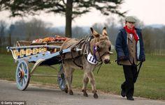 Horse Wagon, Horse Cart, Farm Animals, Cute Animals, Hungry Horse, Donkey Donkey, Pull Wagon, Work Horses, Draft Horses