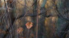 nature # 10 - Limited Edition of 1 Photograph Color Photography, Nature Photography, Original Paintings, Original Art, Photo Colour, Artwork Online, Buy Art, Paper Art, Photo Art