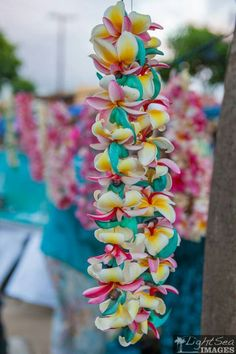 """the """"Don't say Baby"""" game with Leis!Play the """"Don't say Baby"""" game with Leis! Hawaiian Theme, Hawaiian Luau, Hawaiian Flowers, Tropical Flowers, Hawaiian Rainbow, Hawaiian Girls, Hawaiian Baby Showers, Luau Baby Showers, Leis"""