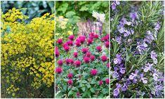Gyógy és fűszernövények Flowers, Gardening, Plant, Lawn And Garden, Royal Icing Flowers, Flower, Florals, Floral, Horticulture