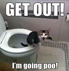 GET OUT! I'm going poo!