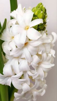 Dark Plum Flowers, Peach Flowers, All Flowers, White Flowers, White Hyacinth, Hyacinth Flowers, Purple Calla Lilies, Calla Lily, Blush Peonies