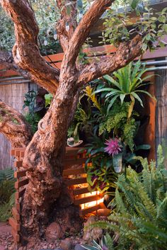 How to build a living wall under a tree canopy -- with shade plants (ferns, bromeliads, caladium) in Woolly Pockets. #diy