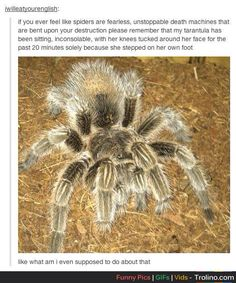 Once my tarantula fell asleep on my arm late one night while I was doing homework.