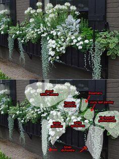 composition jardinière été de fleurs blanches et plantes vertes