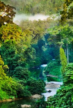 River in lowland rainforest, Danum Valley, Sabah, Borneo