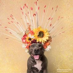 Since Sophie Gamand has adorned pitbull dogs with gorgeous crowns made of flowers to invite the viewer to look at them in a new light—to show that they're just like any other canine. Her ongoing series is called Pit Bull Flower Power. Pitbulls, Aggressive Dog, Dog Photography, Animal Rescue, Cute Puppies, Photos, Photographs, Pictures, Houston