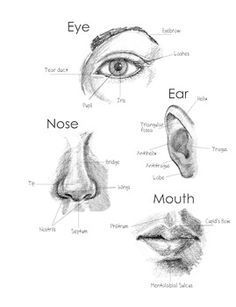 How to Draw and Shade Facial Features front and side view Come disegnare e sfumare. Photoshop Art, Photoshop For Photographers, Photoshop Actions, Nose Drawing, Realistic Eye Drawing, How To Draw Realistic, Side Face Drawing, Pencil Art Drawings, Art Drawings Sketches