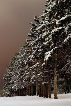 Snow Forest, Iowa