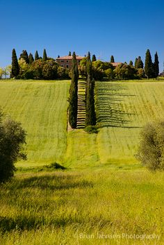 Cypress tree lined lane leading to Villa in San Quirico, Tuscany Italy Brian Jannsen Photography