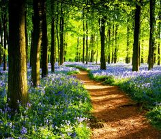 I want to take a walk through this forest, it would be lovely <3